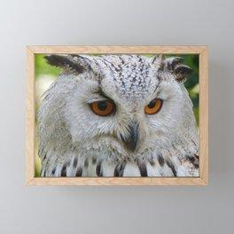 Owl | Chouette Framed Mini Art Print