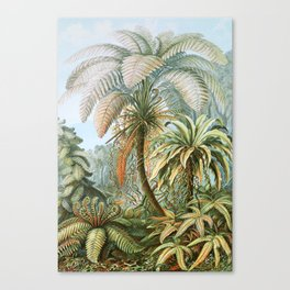 Vintage Fern and Palm Tree Art - Haeckel, 1904 Canvas Print