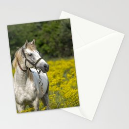 Gray Horse in a Field of Yellow Mustard Stationery Cards