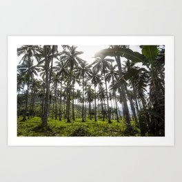 Buko (Coconut) Trees Art Print