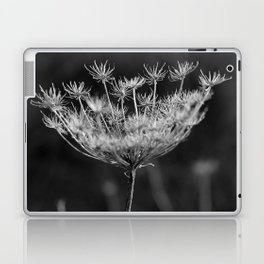 Withered pointed hogweed Laptop & iPad Skin