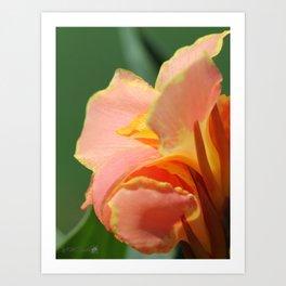 Dwarf Canna Lily named Corsica Art Print