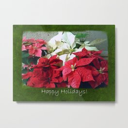 Mixed color Poinsettias 3 Happy Holidays P1F5 Metal Print