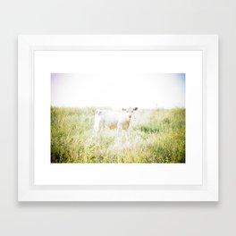Not a lamb Framed Art Print