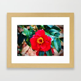 Rich Red Camellia Framed Art Print