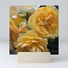 Graham Thomas old fashioned rose Mini Art Print