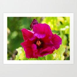 Jazzberry Jam Hibiscus Art Print