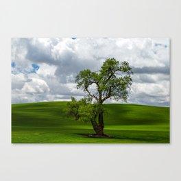 Single Tree in Green Field Canvas Print