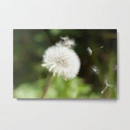 Dandelion Seeds Photography Print Metal Print