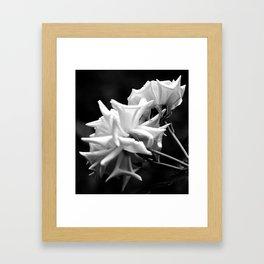 Black & White Roses Framed Art Print