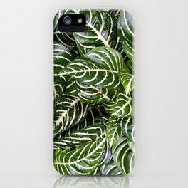 Prayer Plant Maranta iPhone Case