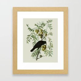 Vintage Crow Illustration Framed Art Print