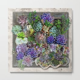 South Africa's Succulents Metal Print