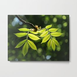 Light in the Leaves Metal Print