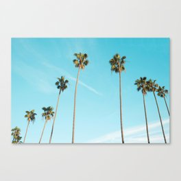 Tropical Miami Palm Trees Canvas Print
