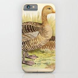 Grey Lag Goose1 iPhone Case