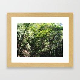 Forest Thru the Trees Framed Art Print