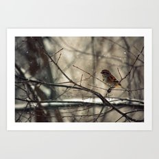 Winter friend. Art Print