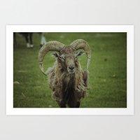 ram Art Prints featuring Ram by Jeremy Jon Myers