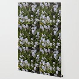 Longwood Gardens Orchid Extravaganza 26 Wallpaper