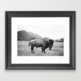 Alaska Bison Framed Art Print