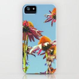 Coneflowers Reaching Skyward iPhone Case