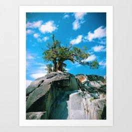 Rock Tree Art Print