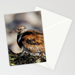 Ruddy Turnstone on Seaweed Mountain at the Beach Stationery Cards
