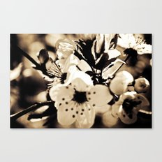 Cream Canvas Print