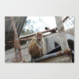 Surprised Monkey in Sri Lanka Canvas Print