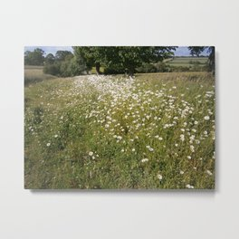 Path of Daisies Metal Print