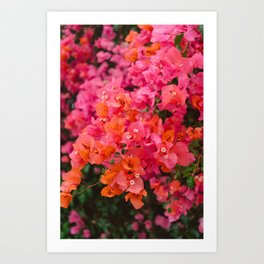 California Blooms XII Art Print