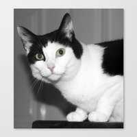 elmo Canvas Prints featuring Elmo by Paul & Fe Photography