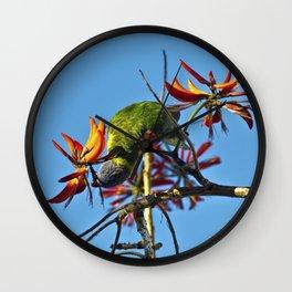 Australian Ringneck Parrot Wall Clock