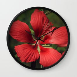 Scarlet Rosemallow Wall Clock