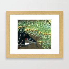 Rose-breasted Grosbeak Framed Art Print