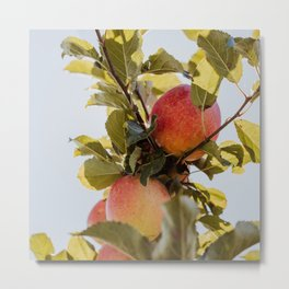 Autumn Apple II Metal Print