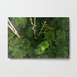 Forty metres above the forest Floor Metal Print