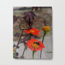 Bumble Bee and Monarch Butterfly on Red and Yellow Flower Metal Print