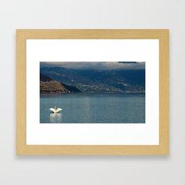 Swan on Lake Geneva Framed Art Print