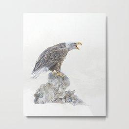 Bald eagle in winter snow Metal Print