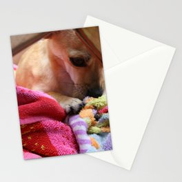 Perro Playing  Stationery Cards