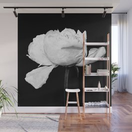 White Peony Black Background Wall Mural