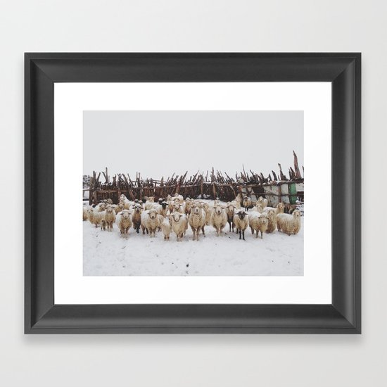 Snowy Sheep Stare Framed Art Print