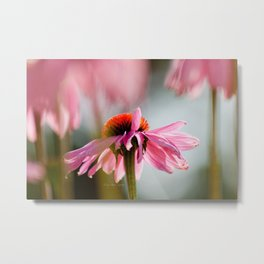 Dancing Pink Echinacea Flower Blossom by CheyAnne Sexton Metal Print