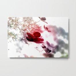 climbing hydrangea red Metal Print