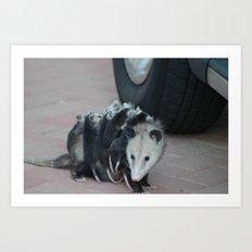 Possum with babies Art Print