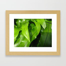 From the Conservatory #42 Framed Art Print