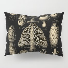 """Basidiomycopa"" from ""Art Forms of Nature"" by Ernst Haeckel Pillow Sham"