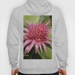Pink Bromeliad Hoody